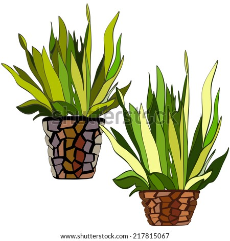 Vector hand drawn bushes in the flower pots - stock vector