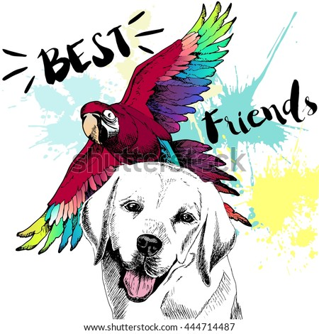 Vector hand drawn concept of labrador retriever and ara macaw friendship. Color hand drawn domestic dog and wild exotic parrot illustration. Best friends. - stock vector