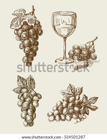 vector hand drawn grape sketch and vineyard doodle - stock vector