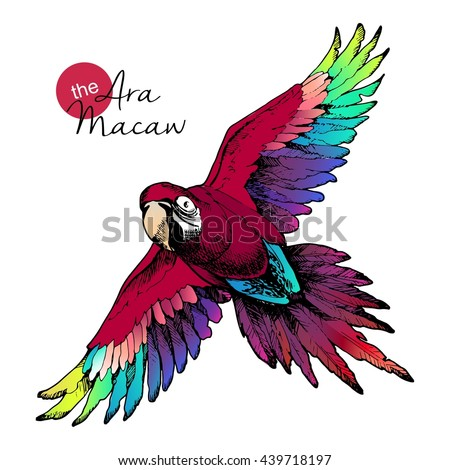 Vector hand drawn illustration of ara macaw parrot. Engraved  exotic bird collection with high vibrant colors. Wild animals portrait. - stock vector