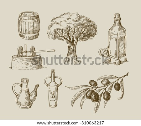 vector hand drawn olive oil sketch and nature - stock vector