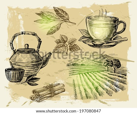 vector hand drawn tea on paint background - stock vector