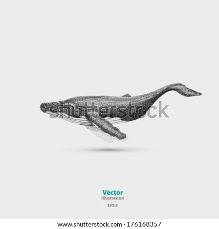 Vector hand drawn whale illustration background - stock vector