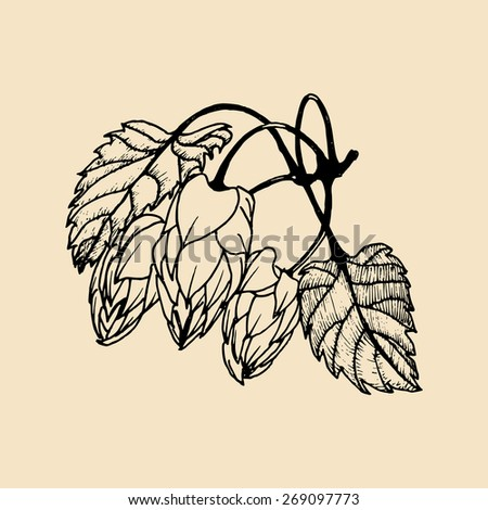 Vector hand sketched illustration of hops - stock vector