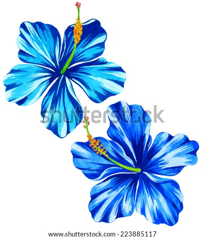 vector hibiscus illustration. watercolor style. - stock vector