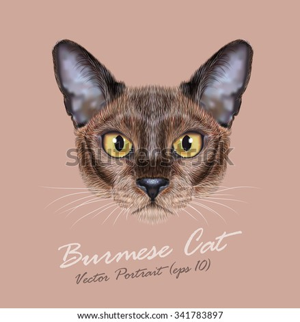 Vector Illustrated Portrait of Burmese Cat. Cute face of Domestic purebreed sable color coat cat on natural background - stock vector