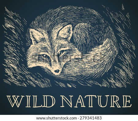 Vector illustration. Artistic drawing of cute fox lying on the grass on scratchboard. Beige scratches on dark blue background. Wild nature. With handwritten text - stock vector