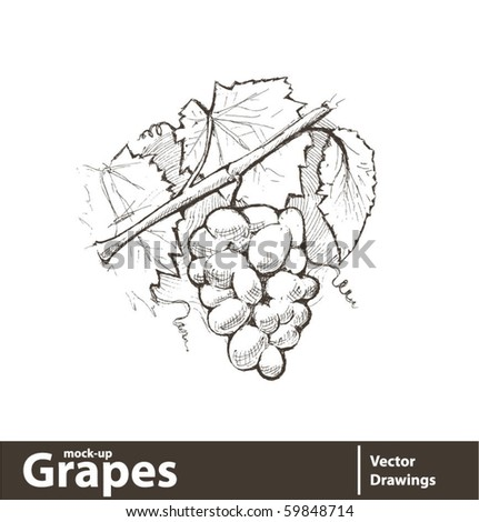 Vector illustration. Grape cluster with leaves - stock vector