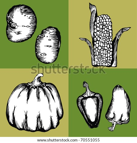 Vector illustration - image-vector images on the theme of vegetables - stock vector
