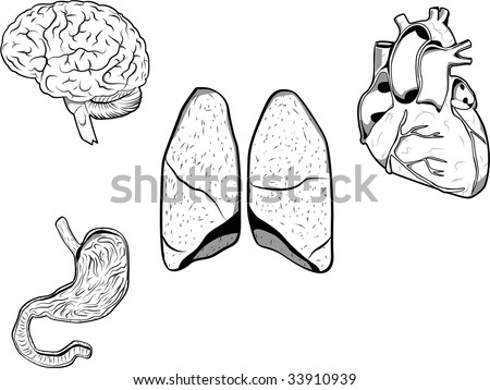 Vector illustration of a brain, heart, stomach and lungs. Each organ on a separated layer in format Eps 8. - stock vector