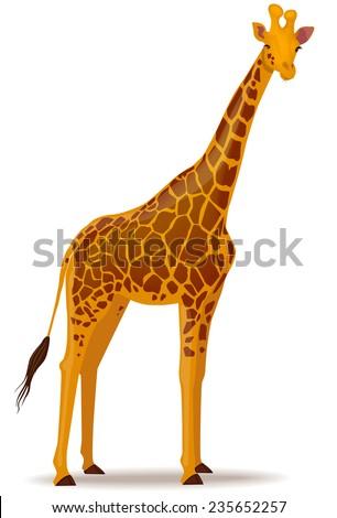 Vector illustration of a giraffe - stock vector