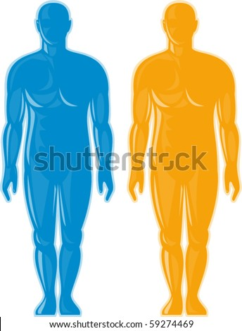 vector illustration of a Male human anatomy standing front - stock vector