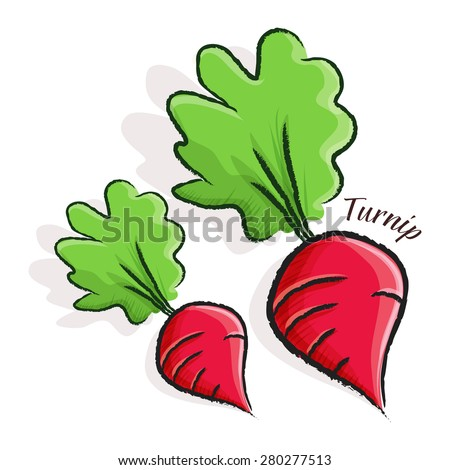 Vector illustration of a turnip in water color style - stock vector