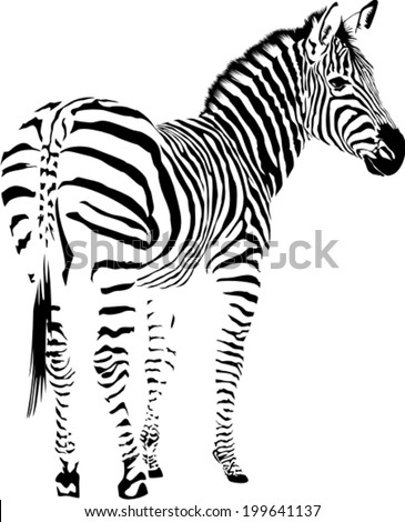 Vector illustration of abstract  zebra on a white background - stock vector