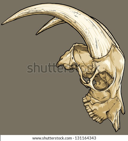 Vector illustration of an isolated goat skull (profile view). Black line work has been grouped separately from color (which has also been grouped). - stock vector