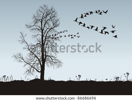 Vector illustration of autumn landscape with chestnut and wild geese - stock vector