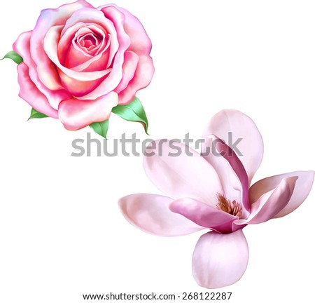 Vector Illustration of beautiful magnolia, Pink rose, Spring flower isolated on white background - stock vector