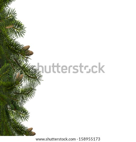 Vector illustration of branches of fir  - stock vector