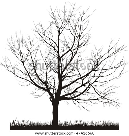 Vector illustration of cherry tree in winter - stock vector