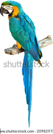 Vector illustration of Colorful blue parrot macaw isolated on white background - stock vector