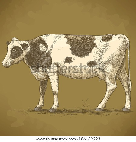 vector illustration of engraving cow on white background - stock vector