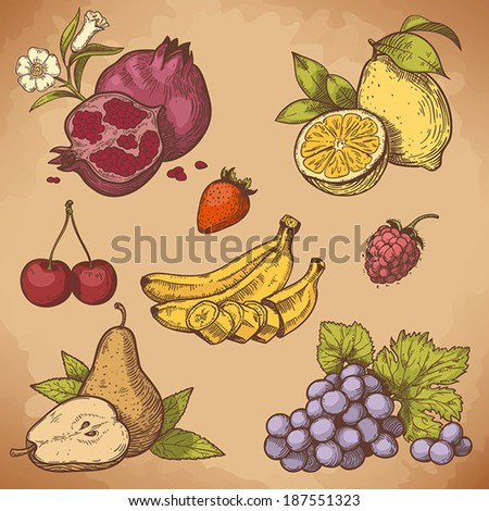 vector illustration of engraving sweet fruits and berries on the branch in retro style - stock vector