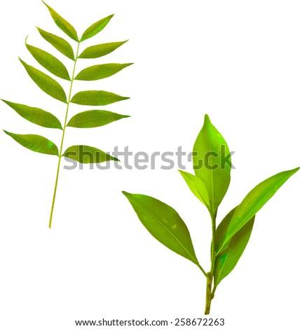 Vector illustration of green tropical leaves on a branch. Young plant leaf, spring leaves, Vector illustration - stock vector