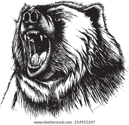 Vector Illustration of growling Bear. Original pen and ink vectorized. Angry Bear - stock vector