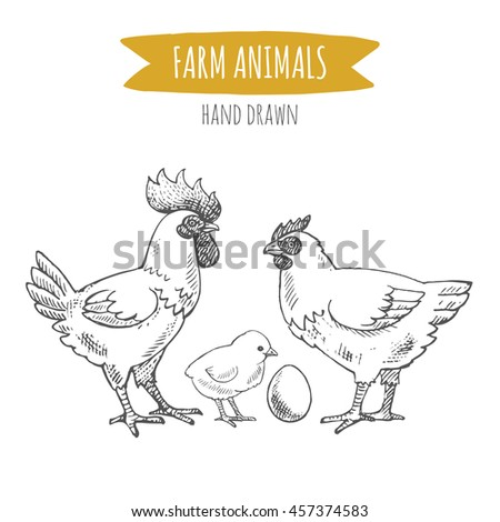 Vector illustration of hand drawn chickens, isolated on white background. Farm animals collection. - stock vector