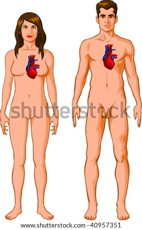 Vector illustration of Human Heart - stock vector
