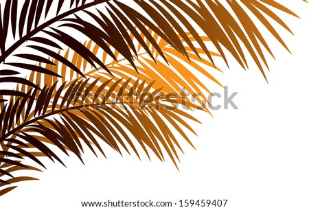 Vector illustration of needleleaf palm tree. - stock vector