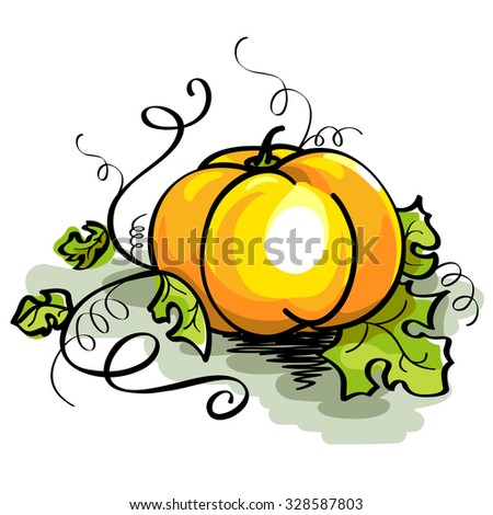 Vector illustration of orange pumpkin with curved stem and green leaves isolated on white background. Thanksgiving - stock vector