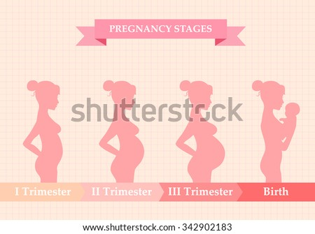 Vector illustration of pregnant female silhouettes. Changes in a woman's body in pregnancy. Pregnancy stages, trimesters and birth, pregnant woman and baby. Infographic elements - stock vector