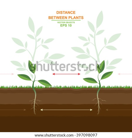 Vector illustration of proper planting. Spacing between plants. Optimal distance. Helpful information - stock vector