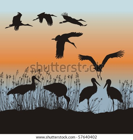 Vector illustration of storks on the lakeside - stock vector