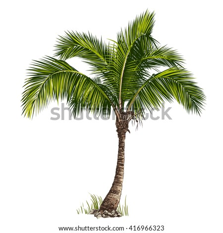 Vector illustration of the palm tree - stock vector