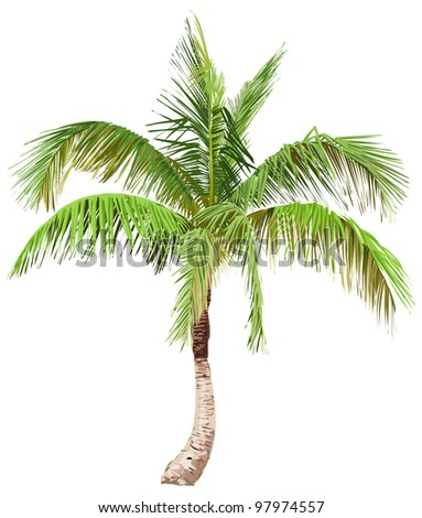 Vector illustration of the palm tree / Eps10 - stock vector