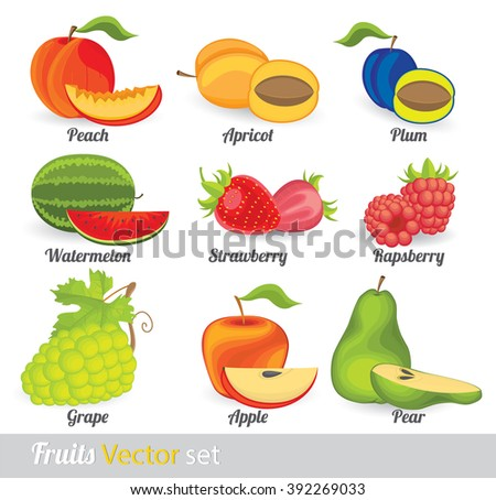 vector illustration of traditional fruit set with peach , watermelon, plum, apricot, raspberry, strawberry, pear, apple and grape - stock vector