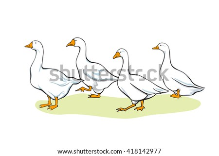 Vector illustration of white domestic goose flock made in realistic, old-fashioned way.  - stock vector