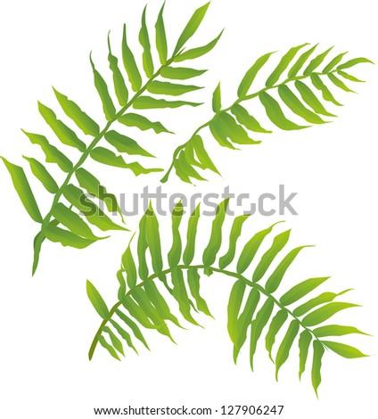 vector illustration of wild fern leaves - stock vector