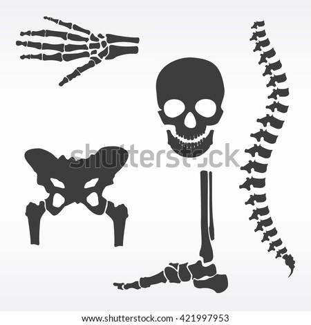 Vector illustration parts of human skeleton. Human joints vector set. Skull, hip bone, spine, hand skeleton and foot bone symbols. Rehabilitation - stock vector