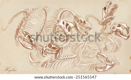 Vector illustration. Series of legendary animals and monsters (skeleton): HYDRA. Drawing comprise at least three layers of lines,the colored background is isolated. Easy editable in layers and groups. - stock vector