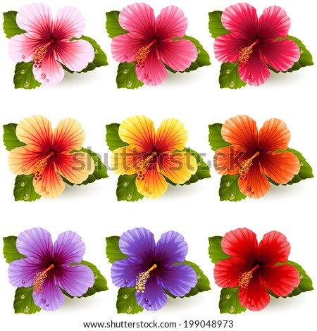 Vector illustration - set of colorful hibiscus flowers - stock vector