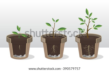 Vector illustration set of gardening elements. Seedling. Phases of growth of a plant with the roots and shoots. Rooted Sprout in flowerpot. Concept of  handled with care - stock vector