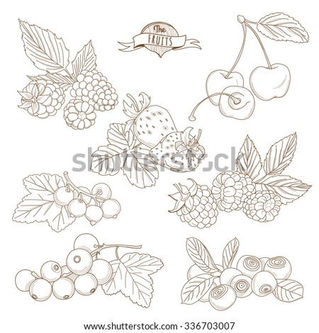 Vector illustration Set of Outline hand drawn berries ( blackberry, cherry, strawberry, currant, raspberry, blueberry) - stock vector
