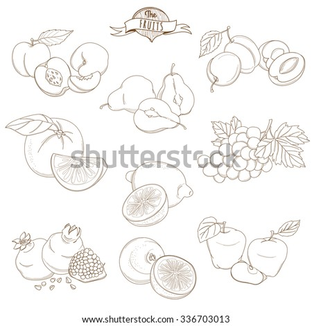 Vector illustration Set of Outline hand drawn fruits with leaves( apple, pear, apricot, plum, orange, lemon, grape, pomegranate, grapefruit, peach) - stock vector