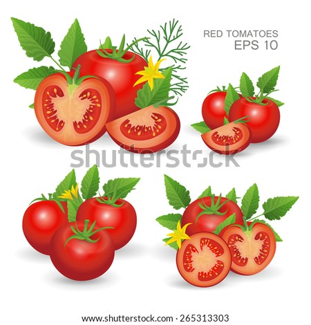 Vector illustration. Set of red ripe fresh realistic tomatoes composition with leaves, blossom and dill isolated on white background - stock vector