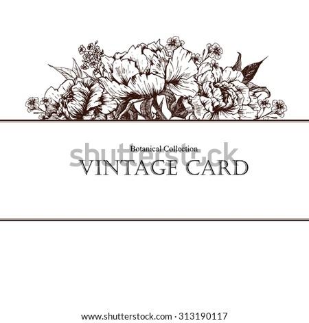 Vector Illustration,  vintage botanical peony flower card - stock vector