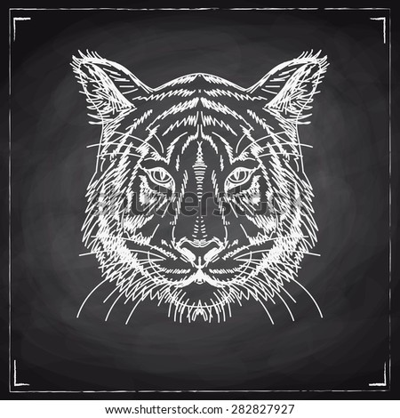 Vector illustration with tiger head. Hand drawn sketch. Chalkboard. - stock vector