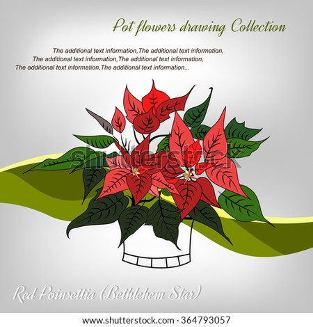 Vector image flower red poinsettia (Bethlehem Star) whith leaves, flowers, bracts. Colorful image with the ability to add text. EPS10. - stock vector